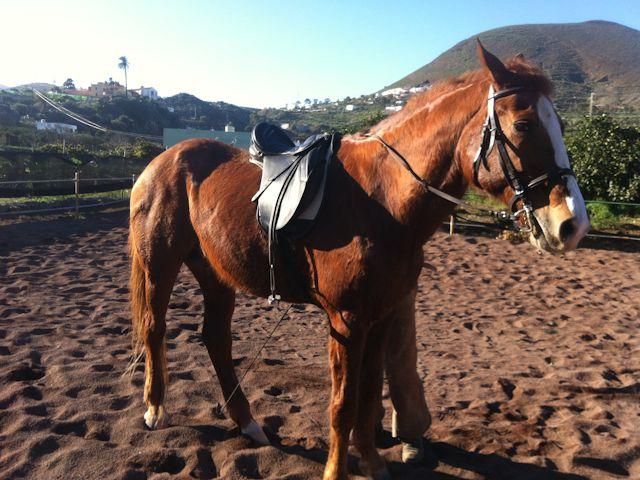 aprender-montar-a-caballo-las-palmas