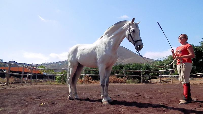 Cursos de Equitación en Telde