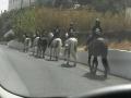 excursion-a-caballo-telde-gran-canaria-fiesta-lomo-magullo-29.jpg
