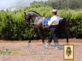 exhibicion-caballos-gran-canaria-15.jpg