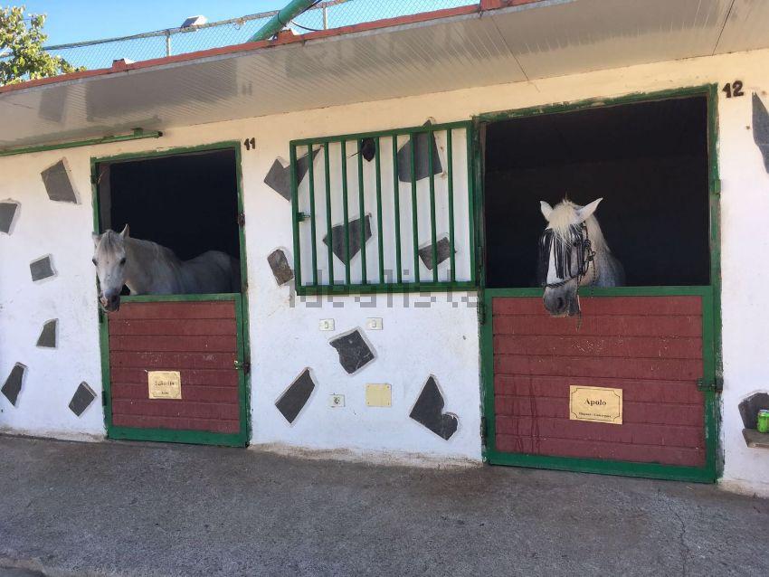 venta-finca-telde-chalet-caballos-valle-de-los-nueve-15