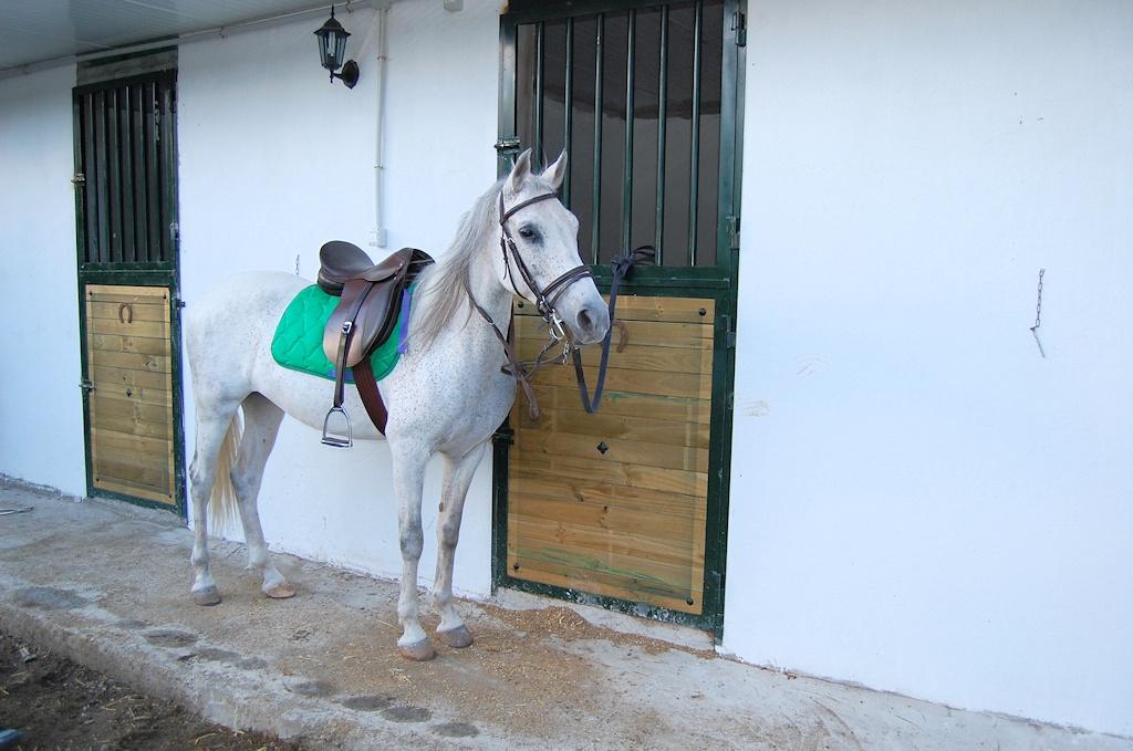 alquiler-cuadras-caballos-las-palmas-gran-canaria