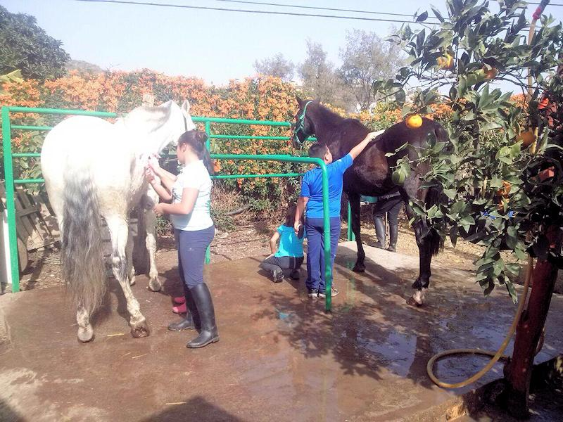 rutas-excursiones-paseos-a-caballo-telde-gran-canaria