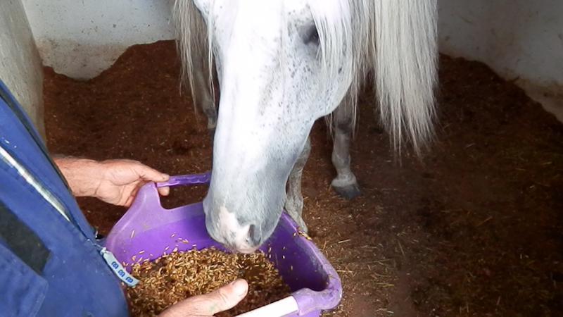 finca-caballos-celebraciones-telde